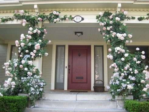 The front porch of this charming old house is embellished by the pale pink climbing 'Pierre de Ronsard' rose, also known as the Eden rose in the USA, clammering up each post of the house. The white flowers at the base of each climber, are white Ivy Geraniums. They are actually sitting in pots. The purpuse is to hide the 'bare feet' of the roses. Very clever!