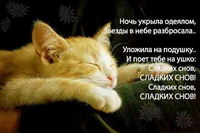 Сладких снов котик картинки с надписями, пираты прикольные картинки