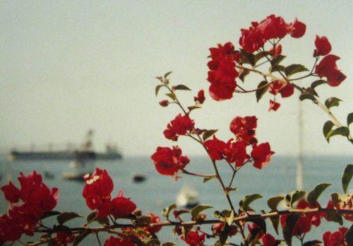 loveFavorite Things, Red Flower, Rosehip, Rose Hip, Mexico Roads, Florists St, Roads Florists, Favorite Flower, Ravishing Red