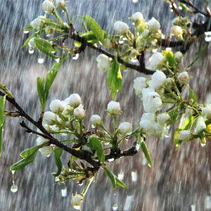 China Rain Fragrance Oil #naturesgarden #soapmakingsupplies #chinarainfragranceoil