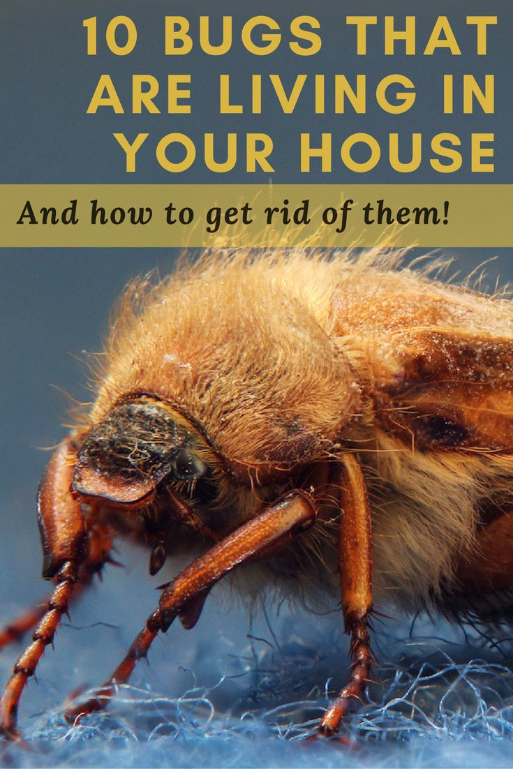 There are insects living in your home you might never have suspected. Click through and learn to identify—and banish— these 10 common household bugs.