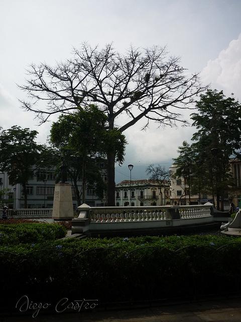Centro de Ibague by DACO82, via Flickr