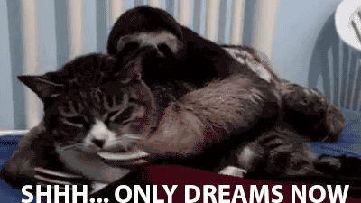 """Shhh... Only dreams now"" [Sloth vs. cat] - Imgur"