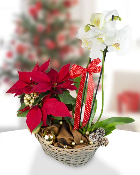 Aranjament cu orhidee Phalaenopsis şi Euphorbia