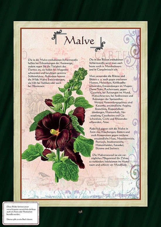 Malve - Wilde Malve