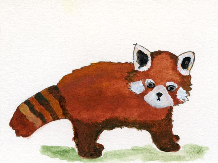 #redpanda #cute #watercolour