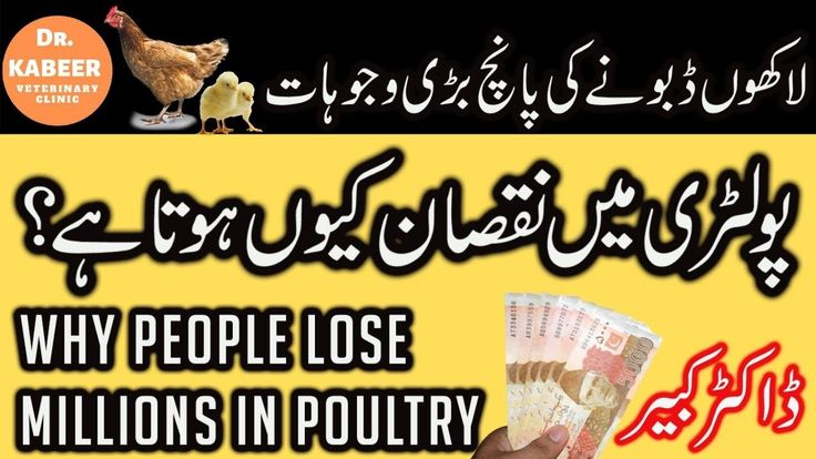 5 Reason of Loss in Poultry Farming Pakistan Poultry
