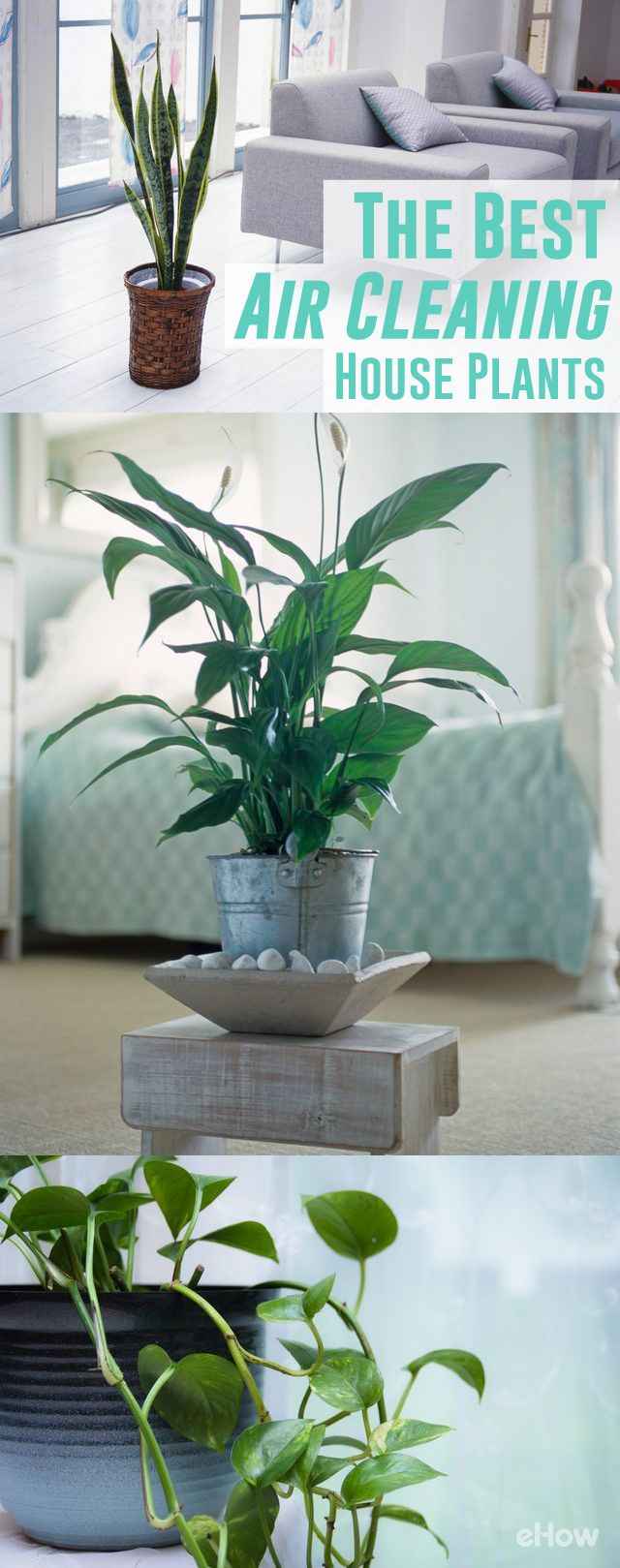 All plants remove carbon dioxide from their environment and release oxygen as part of the natural processes involved with photosynthesis. National Aeronautics and Space Administration (NASA) research shows that many common houseplants are very efficient at removing other problem pollutants from indoor air. http://www.ehow.com/info_8066723_house-plant-cleaning-air.html?utm_source=pinterest.com&utm_medium=referral&utm_content=freestyle&utm_campaign=fanpage