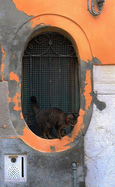 à Venise: Window Shutt, Venetian Cat, Cat Living, Cat Love, Window Cat, Orange Wall, Stylish Window, Black Cat, Orange Copp