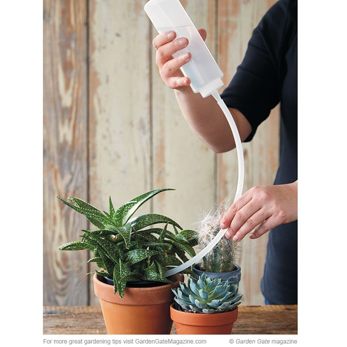 How to water succulents and cactus: Sometimes watering cactus and succulents indoors can be tricky. If they're spaced close together or growing tightly in tiny pots, it's time-consuming to pull each one out to water (and difficult and possibly perilous to work a watering can in there). Try this   watering solution instead: Attach an 18-in.-long piece of clear tubing to the spout of a condiment bottle. Then fill the bottle with water, guide the tubing into the pot, give a squeeze and dampen…