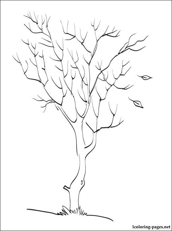 82 best Trees images on Pinterest Drawings Tree drawings and