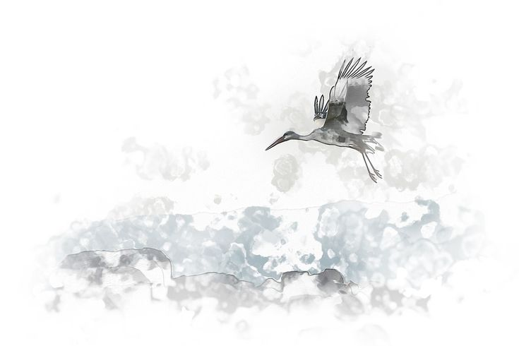 Animal, Winged, Bird, Stork, Fly, Flight, Pass, Fauna
