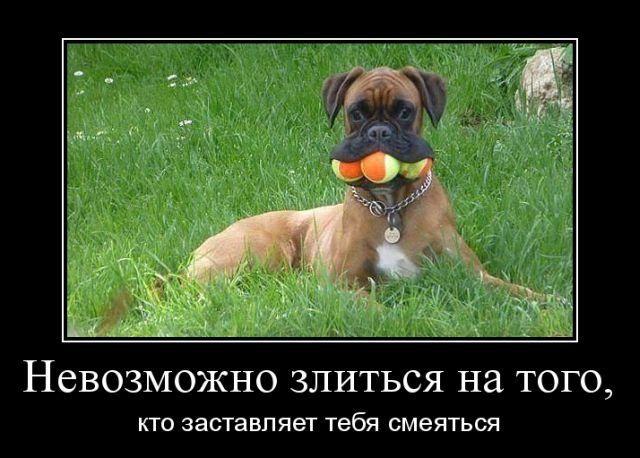 Демотиваторы - приколы! / Приколы