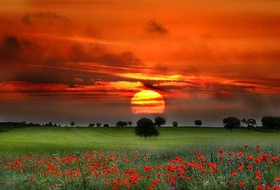 a beautiful sunset: Photos, Color, Mothers Earth, Beautiful Places, Poppies, Beautiful Sunsets, Travel Quotes, Flower, Fields