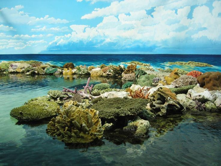 Great Barrier Reef... one of the Natural Wonders of the World