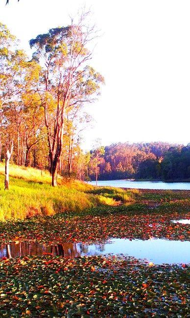 Brisbane Forrest Park Oct 2014