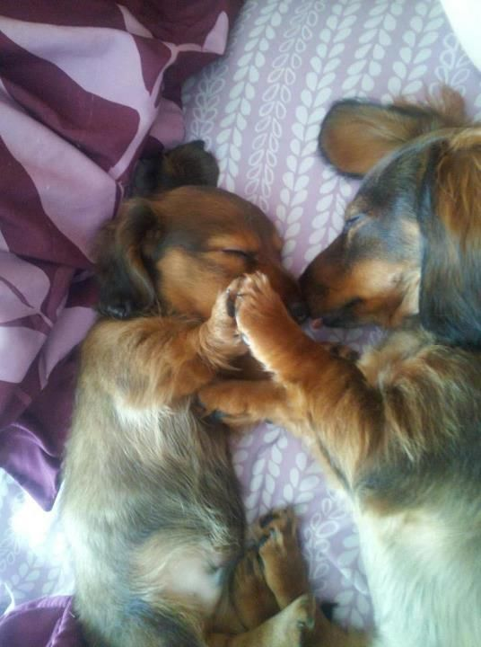 Holding paws while they sleep