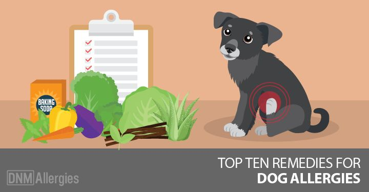 Is your dog suffering from allergies? Here are top ten remedies that tackle your dog's internal and external allergy symptoms.