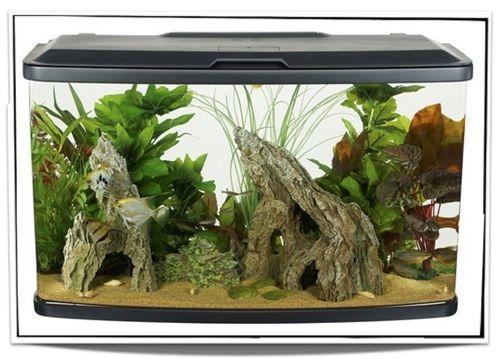Aquariums For Sale at Pet Fish For Sale - 23 gallon Freshwater Aquarium Kit for sale only $154.95 at www.petfishforsale.com 1-877-256-1997