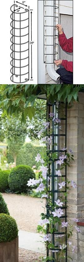 hiding the downspout with a trellis... perfect for the Mandevilla!