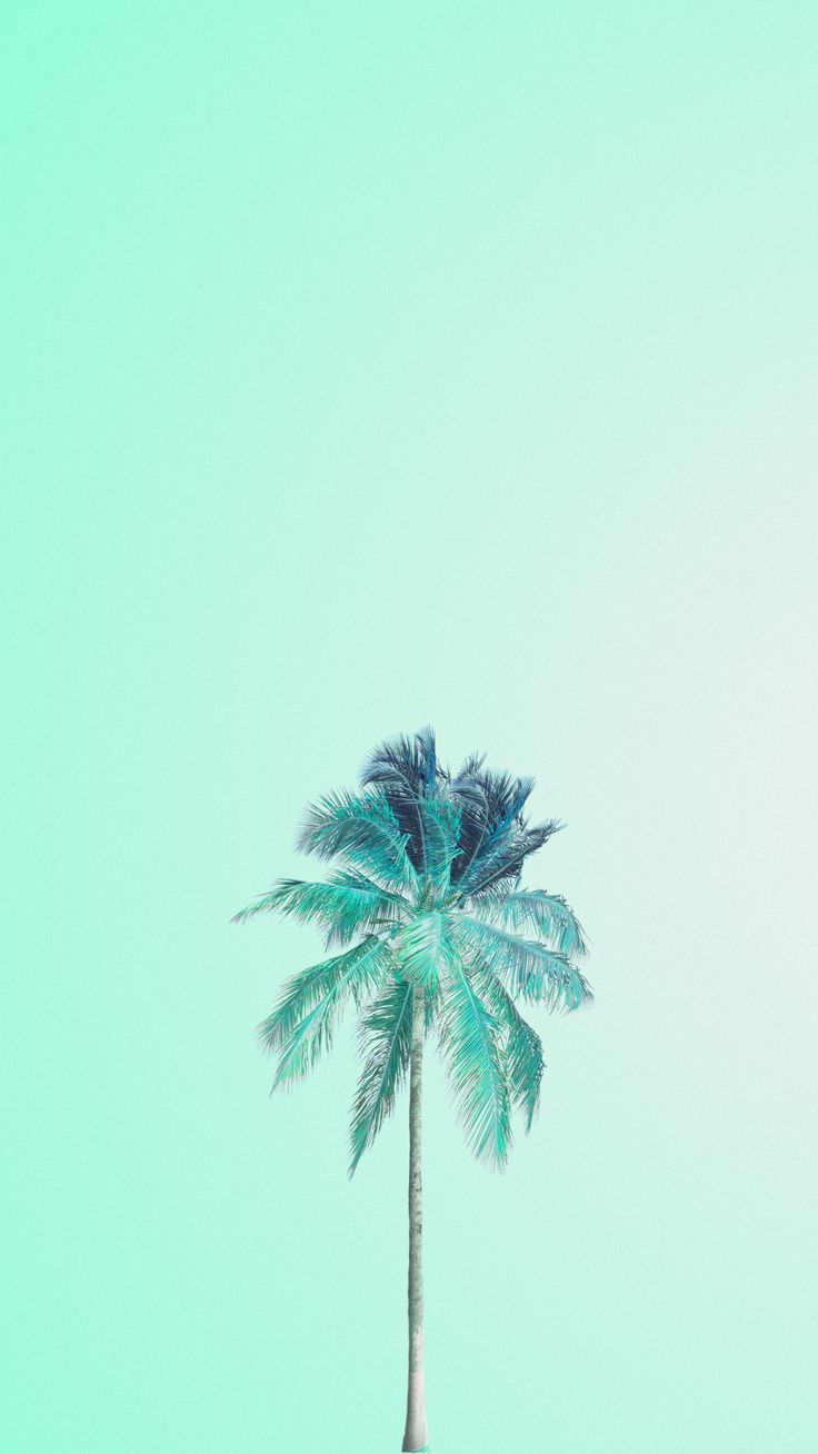 Tumblr iphone wallpaper summer - Mint Green Palm Tree Iphone Wallpaper Phone Background Lock Screen
