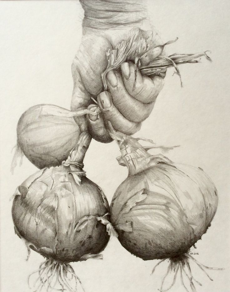 Pencil drawing of onions
