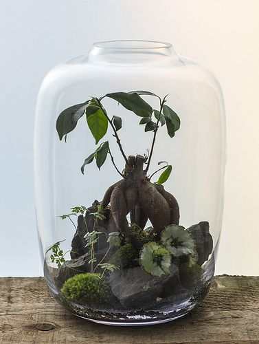 One Tree Hill Terrarium  Shop with us: http://infobloomdesigns.wix.com/bloom