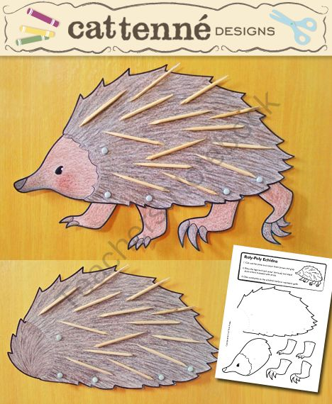 Roly-Poly Echidna from CatTenneDesigns on TeachersNotebook.com (1 page)