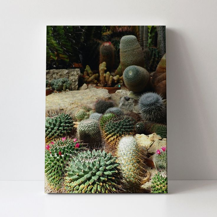 204_OBRAZ_Kaktusy.jpg