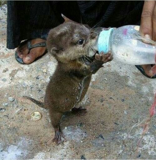Baby otter                                                                                                                                                                                 More
