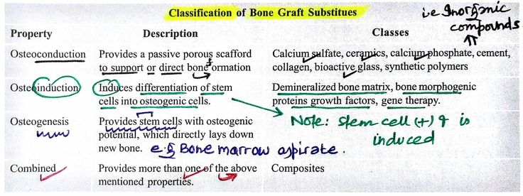 classification of bone grafts pdf