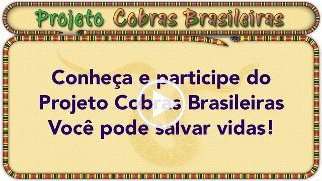 """2.31min video de """"Apresentação do Projeto COBRAS BRASILEIRAS"""" para ser usado como apoio na captação de patrocínio utilizando financiamento coletivo online ou crowdfunding. http://www.cobrasbrasileiras.com.br/como-patrocinar.html"""