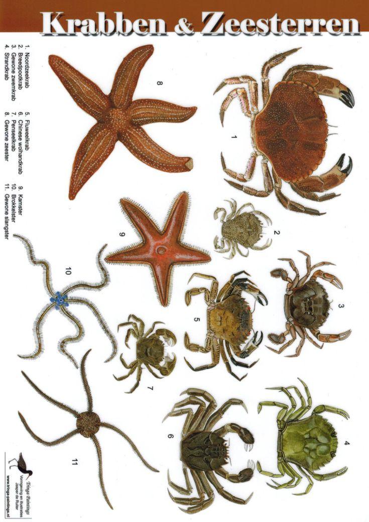Zoekkaart Krabben en zeesterren