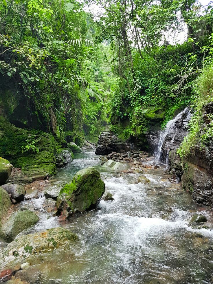 Balong Endah,  Taman Nasional Gunung Halimun Salak,  Bogor, JWa Barat, Indonesia