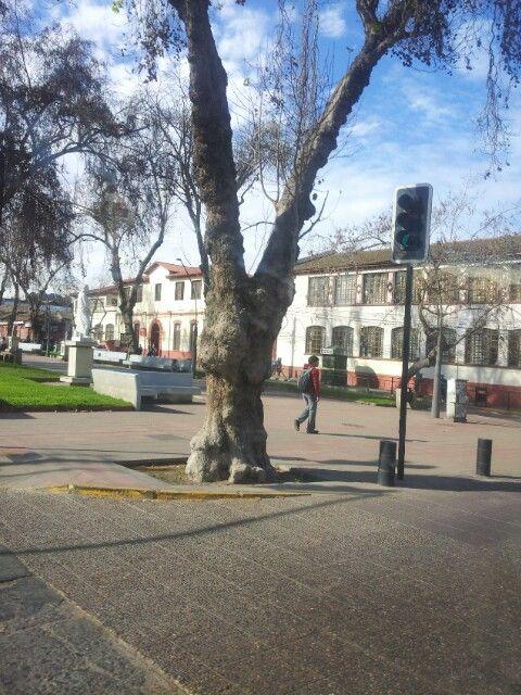Av de aguirre la serena chile visit www.lascubasdecydonia.cl