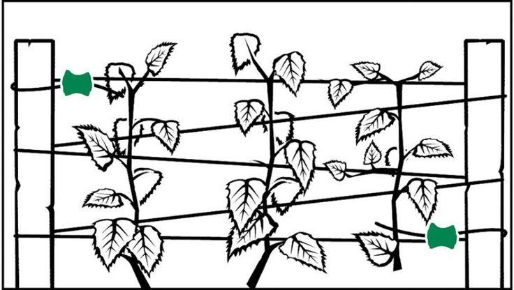 idée pour support plante grimpante