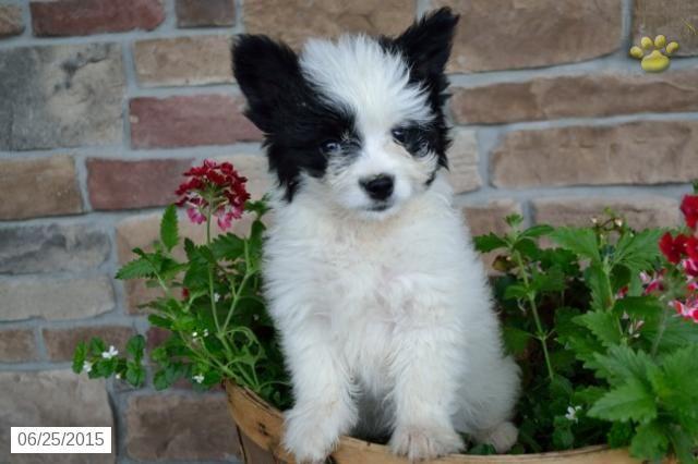 Animals Homeless. Little Dog Cute Puppies South Dakota