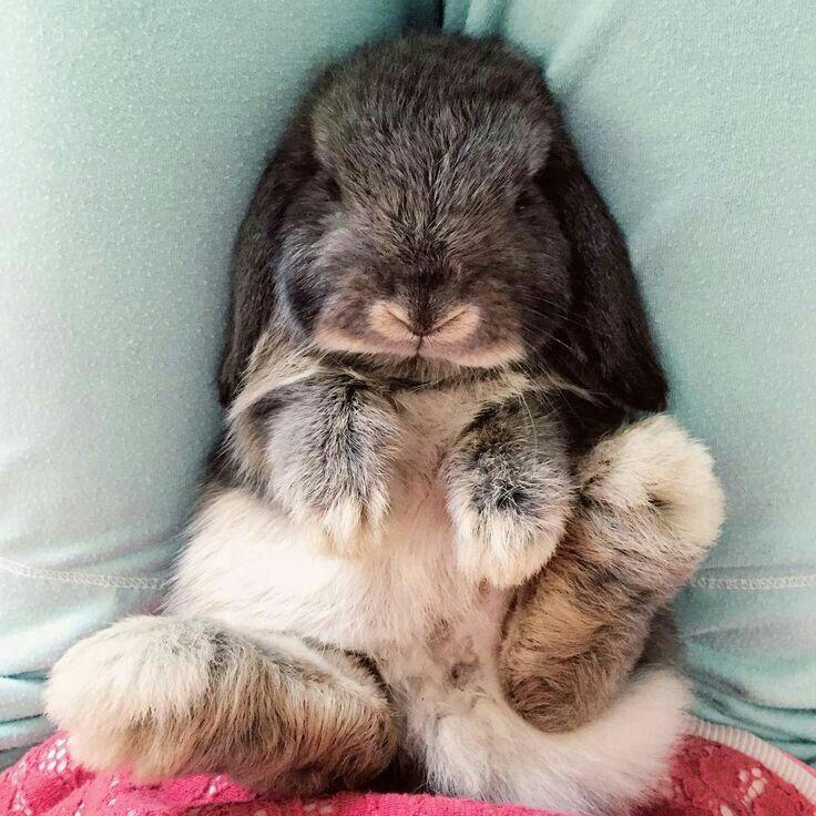 двери смешные кролики фото стикеры опыту, что нее