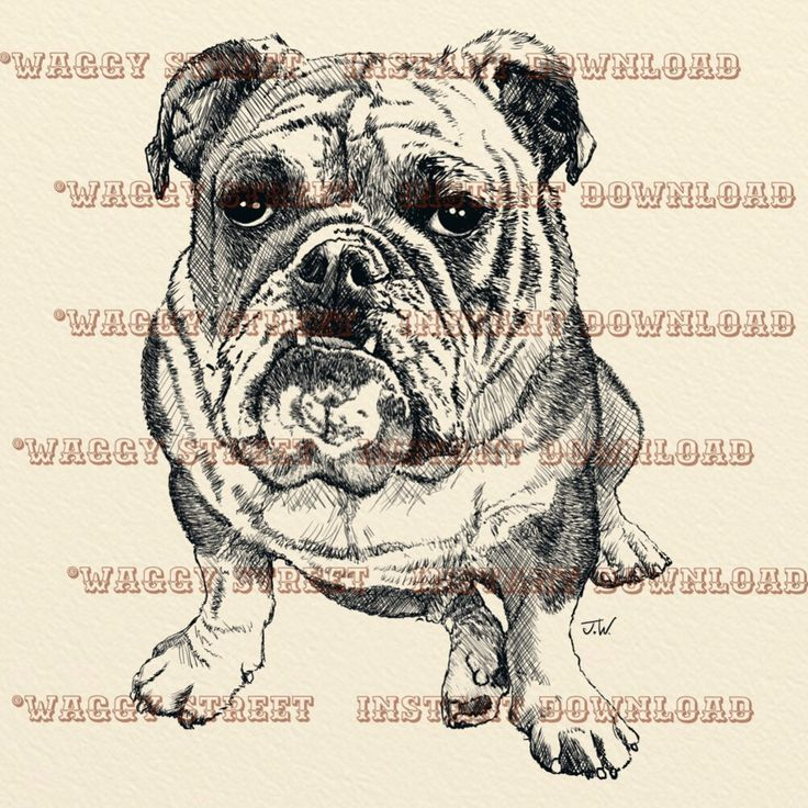 A personal favourite from my Etsy shop https://www.etsy.com/uk/listing/265094326/bulldog-clipart-pen-and-ink-vintage