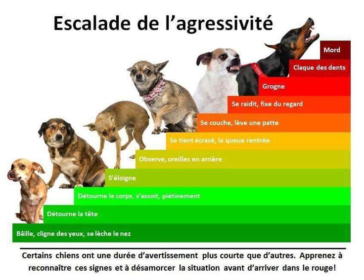 Grille escalade de l'agressivité chez le chien | conseils