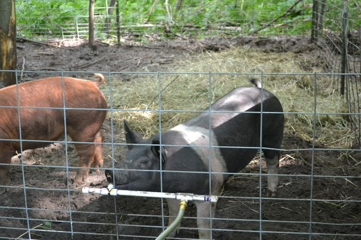 pig feeders how to build