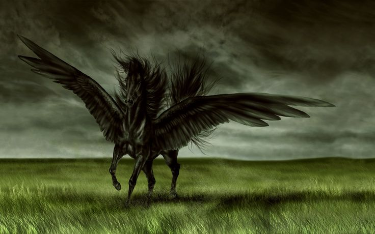 Horse | Wallpaper Pegasus Horse Magic Flowers Desktop Background Hd Free