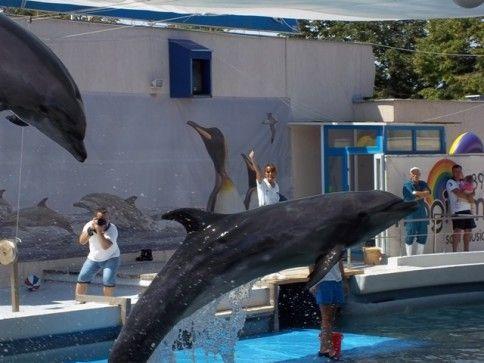 Vizitează Constanța pentru copii și alege din mulțimea de activități precum delfinariul, planetariul, diferitele expoziţii, plajele oraşului și multe altele