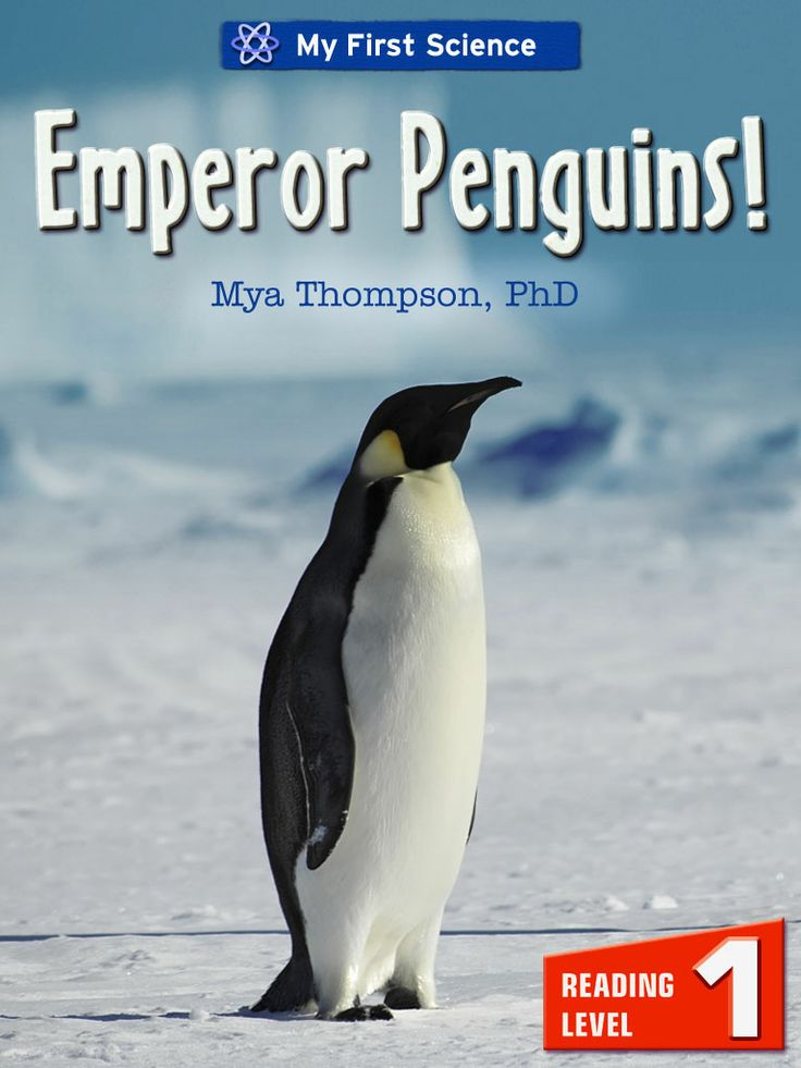 """Emperor Penguins!  Learn about the world of Emperor Penguins! Discover extraordinary fun facts about these Antarctic birds who are great swimmers but cannot fly. Follow them as they mature from egg to adulthood.   """"Emperor Penguins!"""" by Mya Thompson, PhD, is a fun, fact-filled exploration of the world of these fascinating animals. It's a level 1 reader written in a way that young children can understand."""
