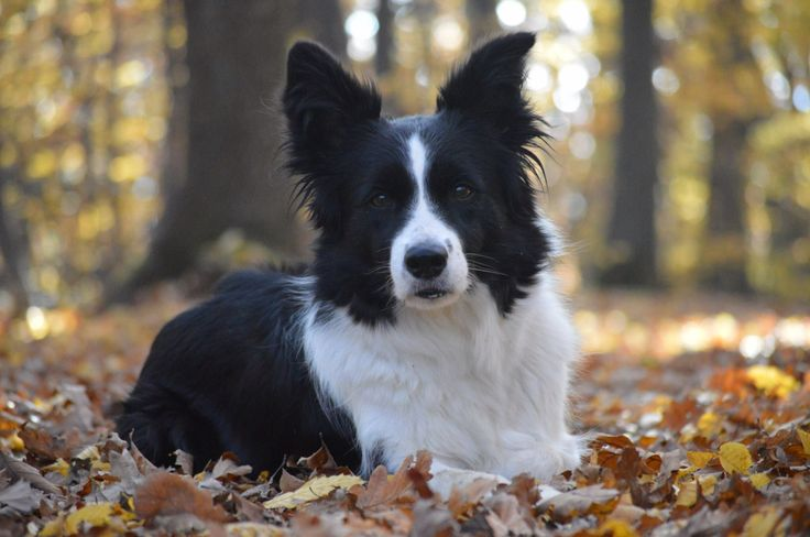My dog Dascha in autumn 2015