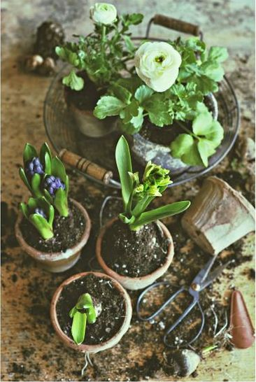 weathered terracotta and sweet uses for rustic wire baskets