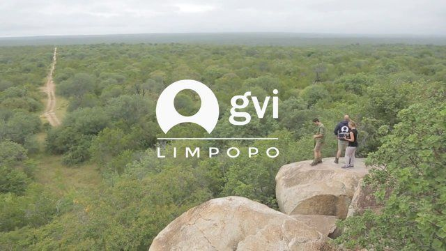 An inside look into what our Limpopo volunteers and interns get to experience! From tracking lions to animal rehabilitation and community development, the Limpopo hub is an experience they will never forget.