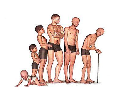 A terapia hormonal é indicada quando existe a diminuição hormonal em nosso organismo e é no no envelhecimento aonde as suas deficiências mais acontecem. O envelhecimento é inevitável, mas isto não significa que não passamos fazer nada para amenizar o envelhecimento patológico ( ex: sarcopenia, osteoporose, depressão, perda da memória, sobrepeso e ou obesidade, fadiga e etc.).