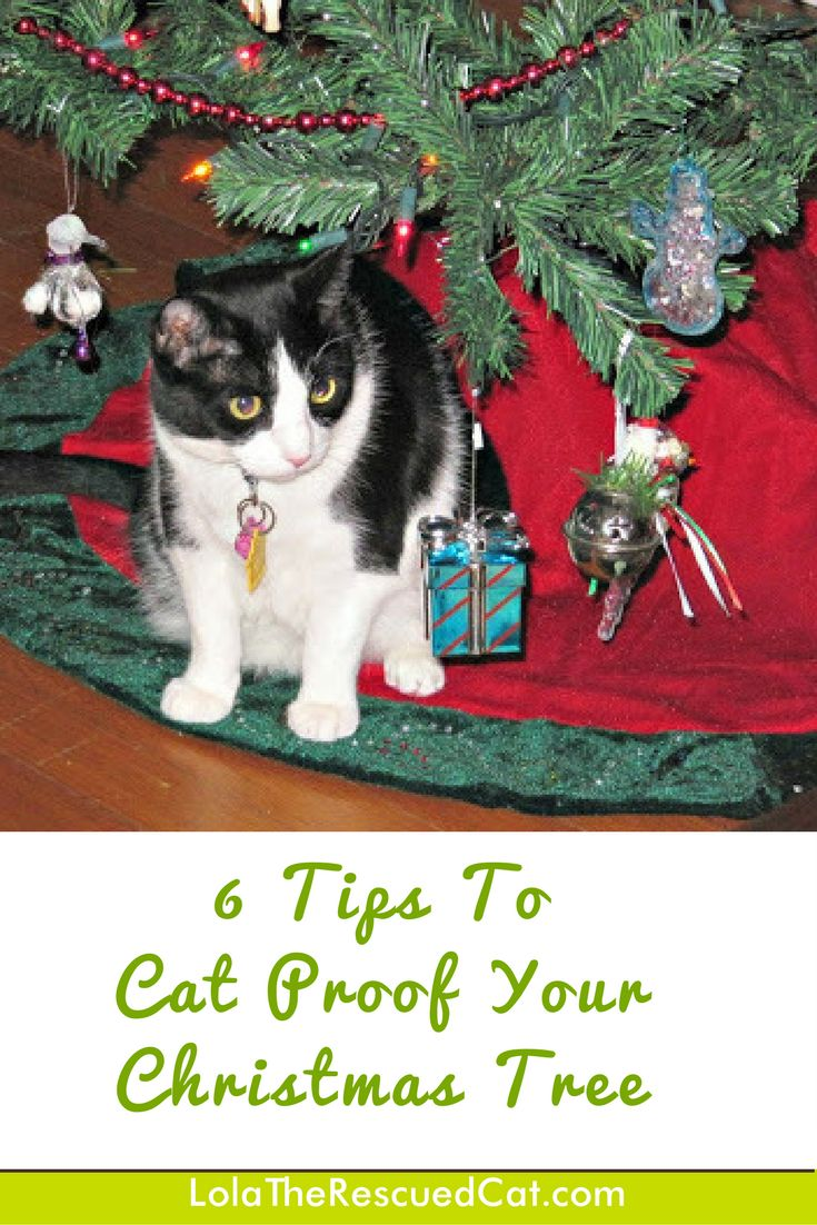 Christmas Trees are festive and beautiful, but could also pose some dangers to kitty. We have some tips to keep your tree looking festive while keeping it cat proof.