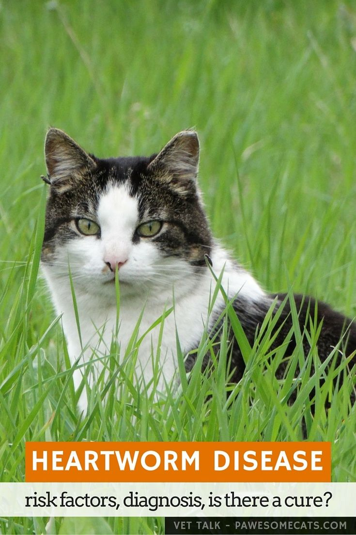 Natural Cure For Heartworms Cats
